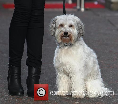 Pudsey Celebrities outside the ITV studios  Featuring:...