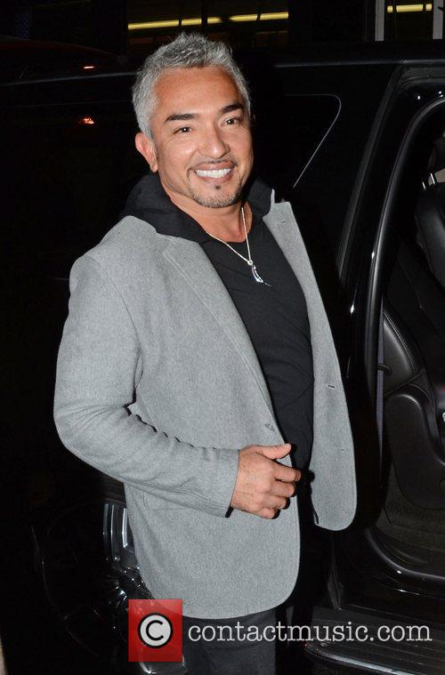 how to get in contact with cesar millan