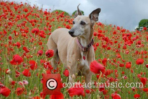 Place Runner Up, Dog Portrait, Photo and Sarah Brown 10
