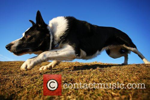 Overall winning photo for Dog Photographer of the...