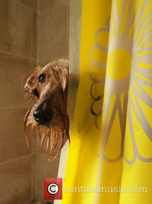 Special Mention in the Dog Portrait category. Photo...