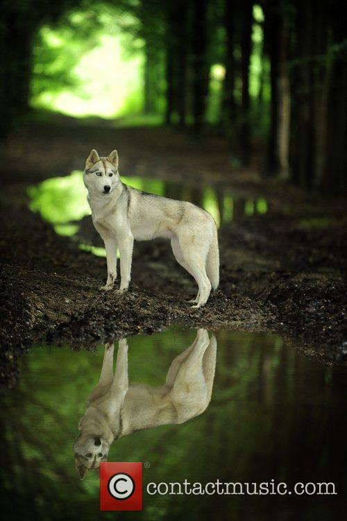 Winner, Dog Portrait, Photo and Shane Wilkinson 4