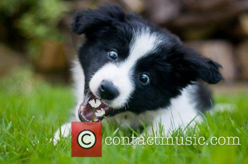 Winner in the Puppies category. Photo taken by...