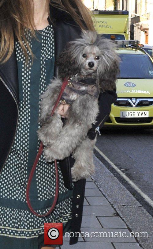 Sunday Girl's dog London Fashion Week Spring/Summer 2013...