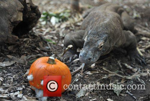 Raja the Komodo dragon, who featured in the...