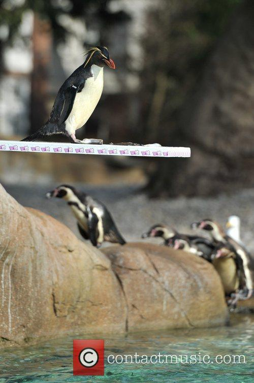 Penguins celebrate London 2012 with custom-made diving board...
