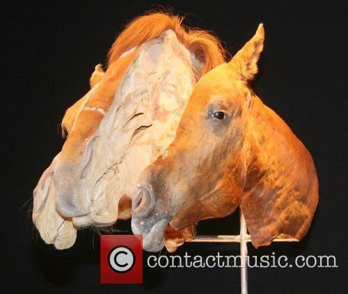 Horses head,  at the 'Animal Inside Out'...