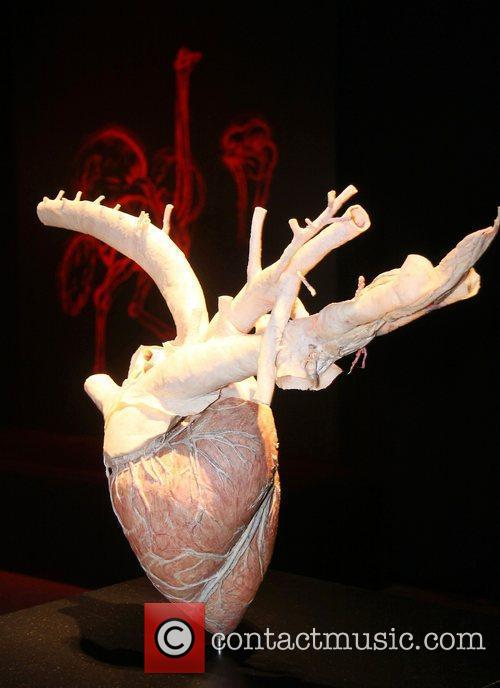 Plastinated heart,  at the 'Animal Inside Out'...