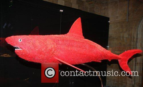 Plastinated shark,  at the 'Animal Inside Out'...