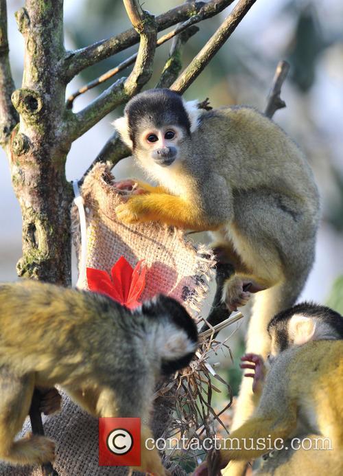 Featuring: Squirrel MonkeysWhere: London, United Kingdom