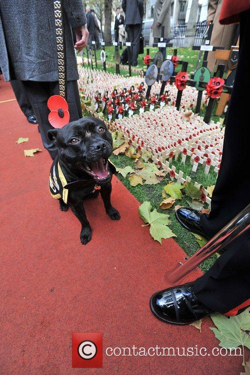 Veterans, Field, Remembrance and Westminster Abbey 25