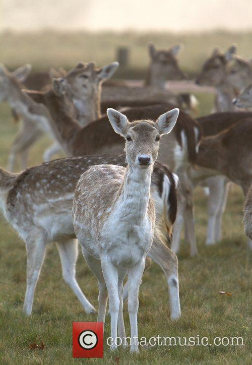 Deer gather in Richmond Park as the sun...