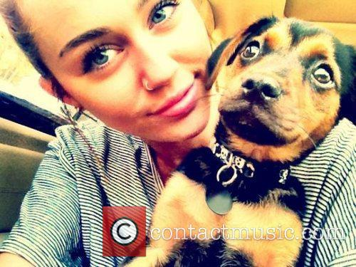 Miley Cyrus shows off her new nose ring...