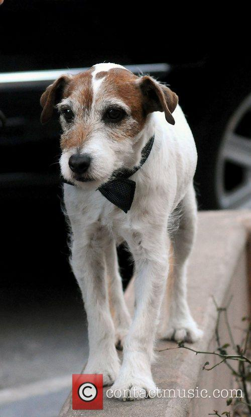 Uggie, the dog from the movie 'The Artist'...