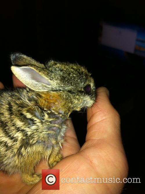 US Marine Rabbit Rescue