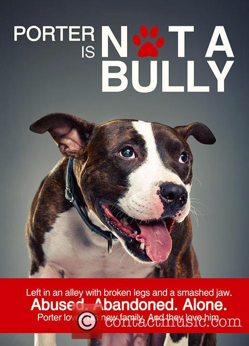 Not a Bully Campaign