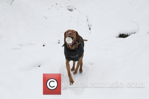 Dog walker taking advantage of the snow