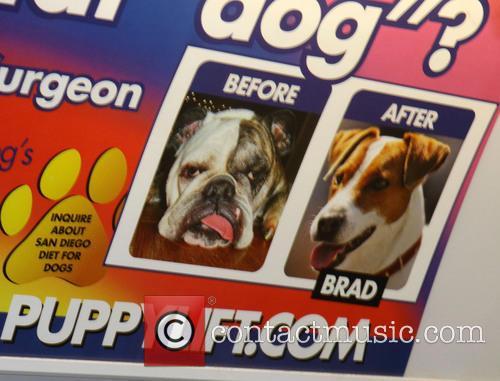 Canine plastic surgery advert