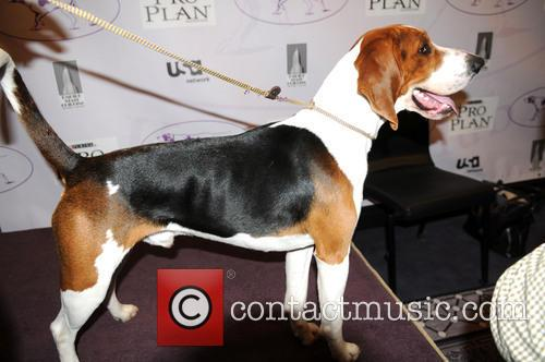 The Westminster Kennel Club and Annual Dog Show 2