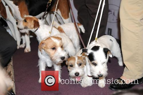 The Westminster Kennel Club and Annual Dog Show 3