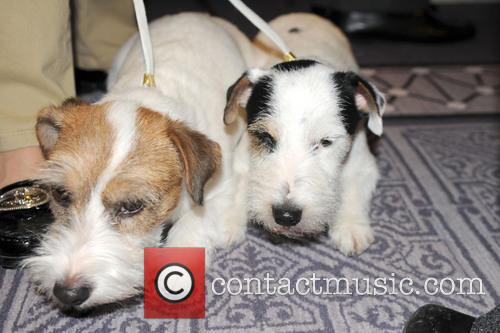 The Westminster Kennel Club and Annual Dog Show 7