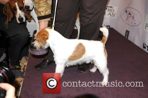 The Westminster Kennel Club and Annual Dog Show 10