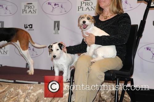 The Westminster Kennel Club 137th Annual Dog Show...