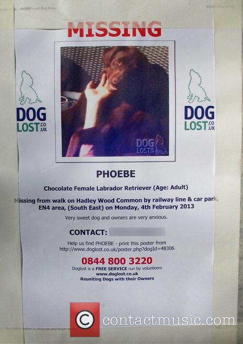 Emma Bunton missing dog poster