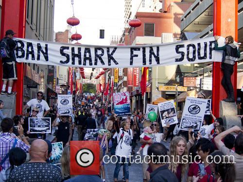 Shark Fin protest