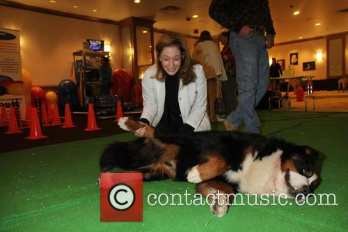 Dog gets a cuddle - Dog Spa at the Westminster Dog Show