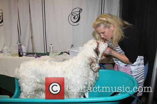 Owner kisses dog - Dog Spa at the Westminster Dog Show