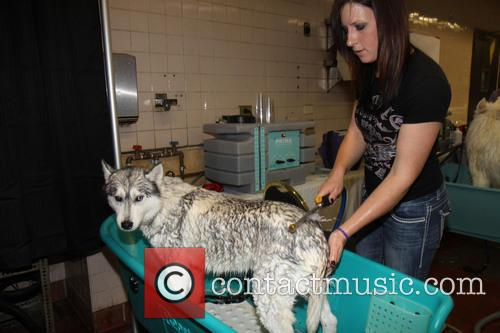 Bath time for one pooch - Dog Spa at the Westminster Dog Show