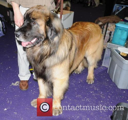 Westminster Kennel Club Dog Show 2013