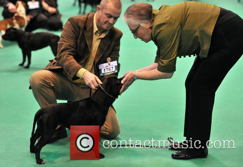 Day 1 of the 2013 Crufts Dog Show...