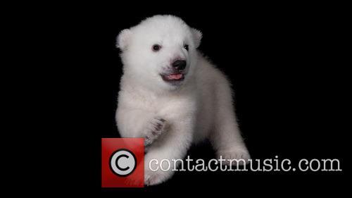 The Buffalo Zoo introduced its new born polar...