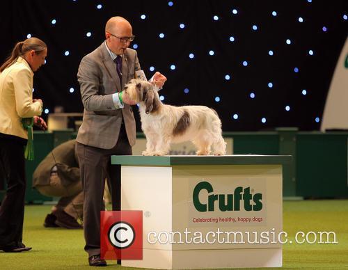 Petit Basset Griffon Vendéen wins best of breeds...