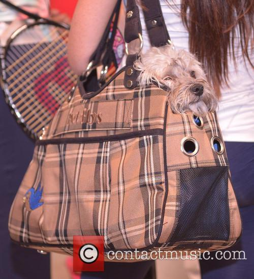Venus Williams, Venus's Dog, Dog, Handbag and First Serve