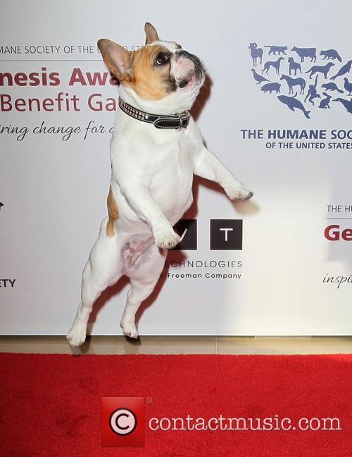beatrice the humane societys 2013 genesis awards 3572631