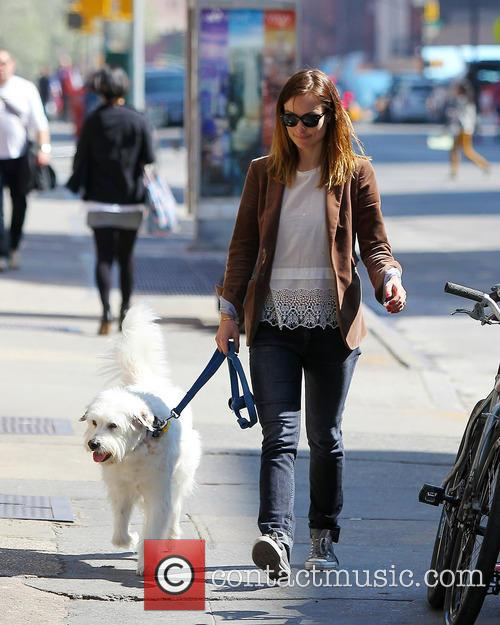 olivia wilde olivia wilde walking her dog 3626238
