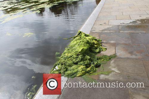 Algae on Whitestone Pond
