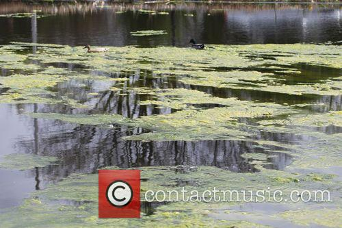 Whitestone United Kingdom  City pictures : Picture Algae growth In Hampstead Pond | Photo 3629821 ...