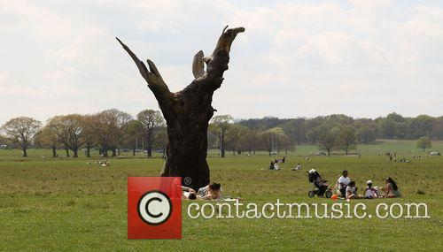 People In Richmond Park and Atmosphere 3