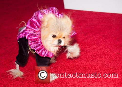 giggy for your consideration emmy event 4 pictures