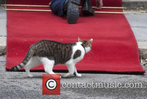 Larry, the Prime Minister's cat outside 10 Downing...