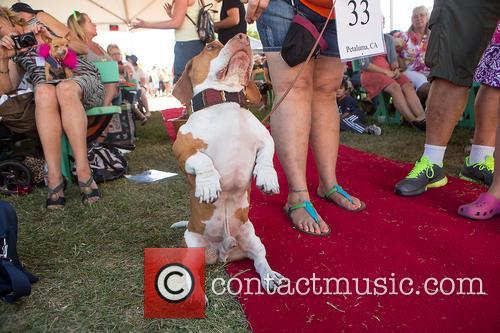 World's Ugliest Dog(TM) Winner