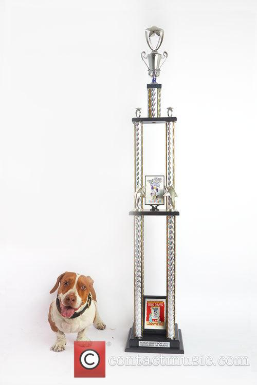 Walle - Four-year Old Part Boxer Beagle and Basset. World's Ugliest Dog™ 2013. 2