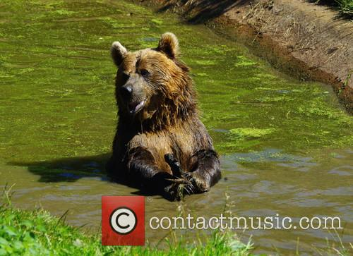 Zoo animals cool down at ZSL Whipsnade Zoo