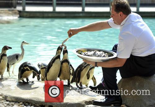 Penguins at ZSL London Zoo are fed by...
