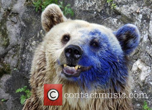 Brown bear was painted by an unknown visitor