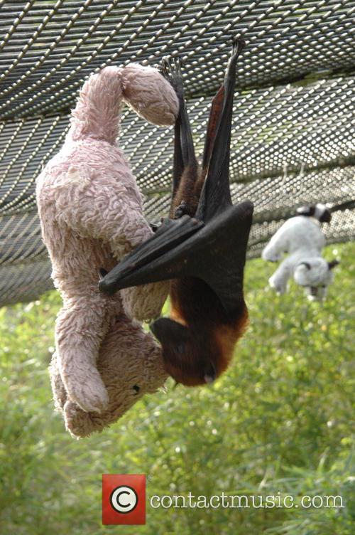 Bat Hugs Cuddly Toy